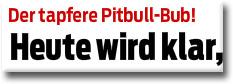 Pitbull-Bub